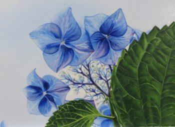 philipsbloemen